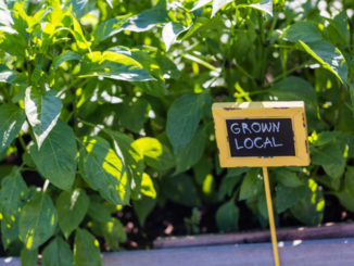 Dig It! 4 Inspirations for Community Gardening