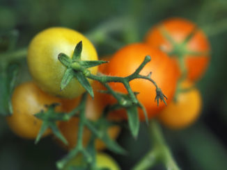 4 Tips for First-Time Kitchen Gardeners