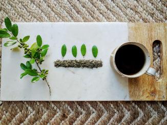Is Caffeinated Tea Growing in Your Backyard?
