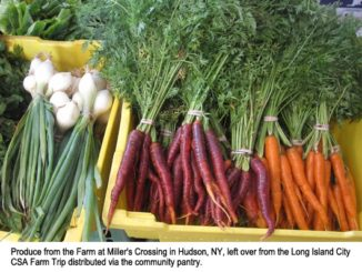 Hunger Watch: CSAs Offer Support to At-Risk Communities