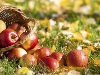 Apple Arugula Panini