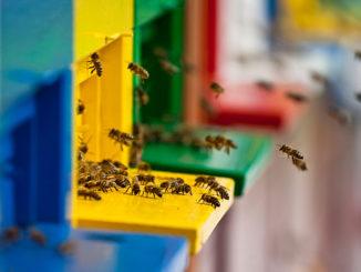 Bee Sustainable