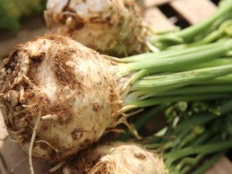 Fall's Forgotten Vegetable: Celery Root
