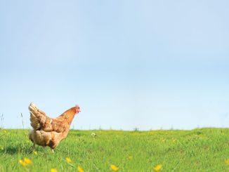 Understanding Animal Welfare Certifications