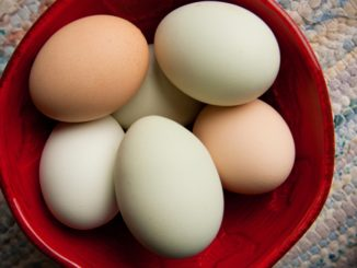 Why Are Some Egg Yolks and Eggshells Different Colors?