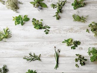 Herbs Take Flavor from Bland to Brilliant