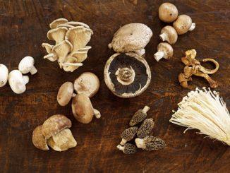 Mushrooms: Taste of the Earth