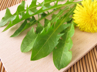 Dandelion Greens: The Weeds You Can Eat