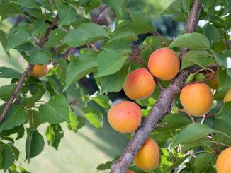 Garden of Eden, Garden of Healthy Eating