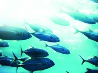 Do Higher Ocean Temperatures Affect Mercury Levels in Fish?