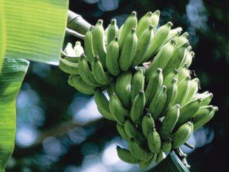 Fair Trade Fruit