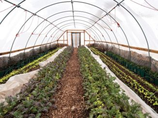 The Urban Farm: A New American Frontier