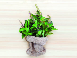 Exploring Adaptogenic Herbs