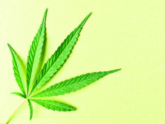 cannabis leaf on yellow background
