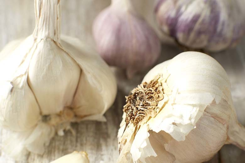 Garlic: The Spicy Vegetable | Food & Nutrition Magazine | Volume 9, Issue 4