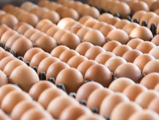 Brown eggs in open cartons