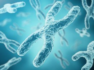 XY-chromosomes image