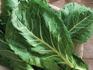 Leaves of collard on a plate