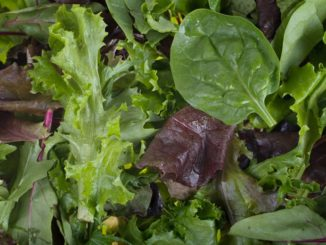 5 Ways to Use Salad Greens Without Making a Salad