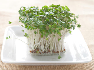 Savor: Shoots and Sprouts